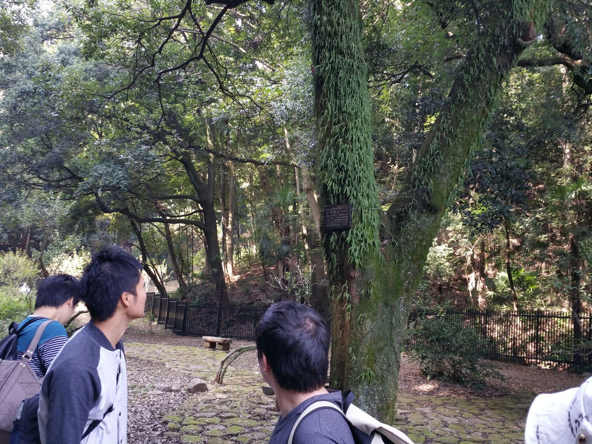 陽樹の林下でゆっくり育ち、陽樹に取って代わる機会を待っています。